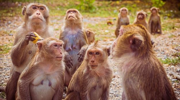 Jonge apen makaak in thailand, zuidoost-azië.
