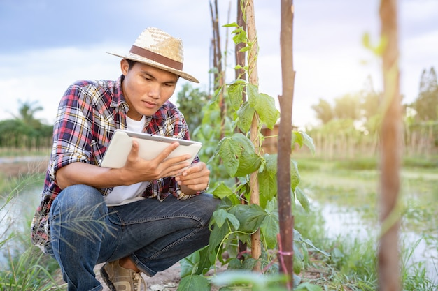 Jonge aziatische boer met behulp van tablet en het controleren van zijn plant of groente