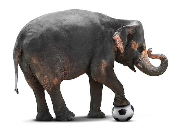 Jonge aziatische olifant voetballen