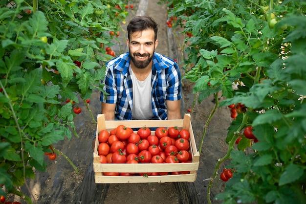 Jonge, bebaarde boerarbeider die vers geoogste tomaten in de tuin houdt