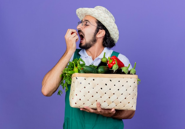 Jonge, bebaarde tuinman man met jumpsuit en hoed bedrijf krat vol groenten bijten tomaat staande over blauwe muur