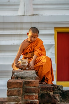 Jonge beginnermonniken die kat in oude tempel spelen bij ayutthaya-provincie, thailand