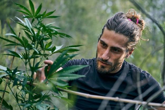 Jonge blanke man zorgt voor de grote cannabisplanten in de tuin