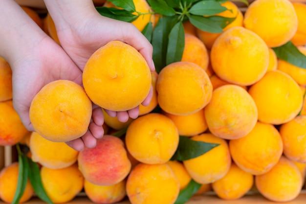 Jonge boer die perziken vasthoudt