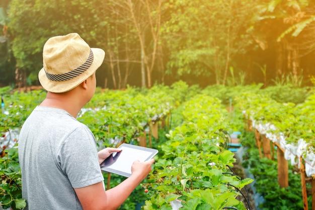 Jonge boer draagt een hoed aardbeienfruit te koop aanplant houdend een tablet om landbouwwerk te redden