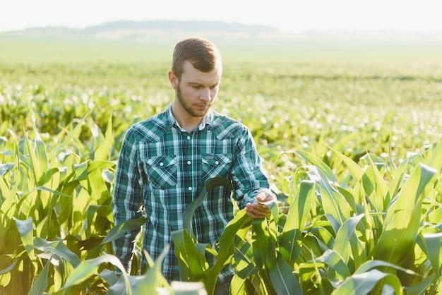 Jonge boer inspecteert een veld met groene maïs. agrarische industrie.