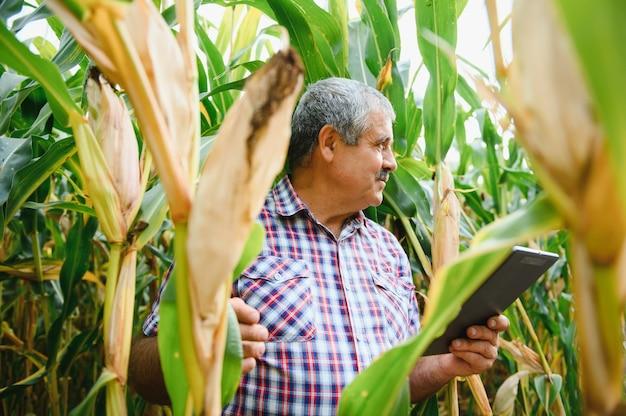 Jonge boer onderzoekt maïszaad in maïsvelden tijdens de oogst