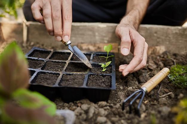 Jonge boer werkt in zijn tuin klaar voor zomerseizoen. man plant teder groene spruit met tuingereedschap in zijn huis op het platteland.