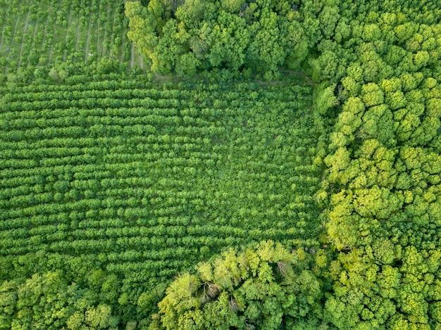 Jonge bomen planten. het bos is een natuurlijk ecosysteem. concept van bosbehoud.