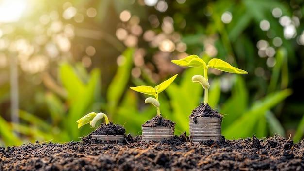 Jonge boompjes van groeiende planten op gestapelde munten en vruchtbare grond, het concept voor investeringen voor landbouw en teelt.
