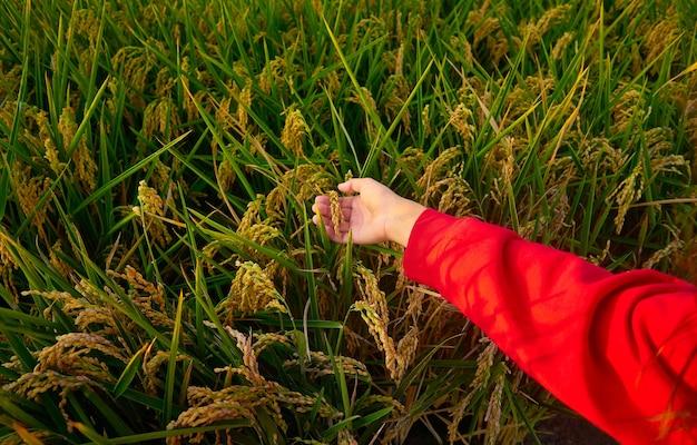 Jonge dame vallende rode jas met groen veld Gratis Foto