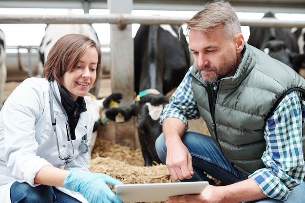 Jonge dierenarts en werknemer van de hedendaagse melkveehouderij die tijdens het werk online gegevens op touchpad-display doorneemt