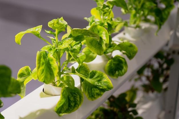 Jonge en verse organische geoogste groenten hydrocultuur tuin