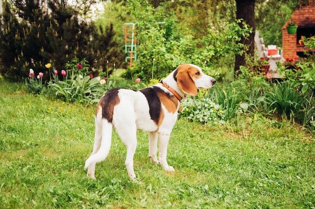 Jonge estse hond tegen de achtergrond van gras en bloemen op een zonnige dag.