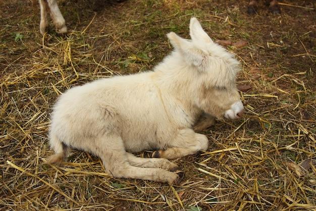 Jonge ezel jonge ezel