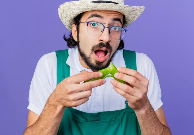 Jonge, gebaarde tuinmanmens die jumpsuit en hoed draagt die helften van groene hete spaanse peperpeper houdt die voorzijde verrast status over blauwe muur bekijkt
