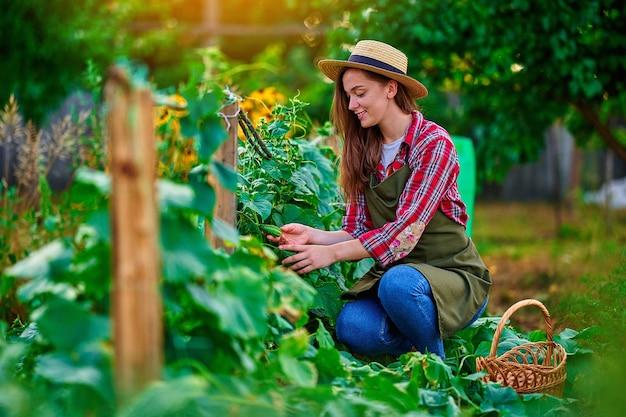 Jonge gelukkige glimlachende vrouwenboer die rijpe zelfgemaakte biologische komkommers oogst in zijn eigen tuin