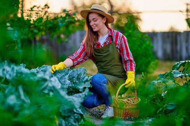 Jonge, gelukkige, schattige lachende boer met stromand die rijpe, milieuvriendelijke, biologische, zelfgemaakte kooloogst oogst in zijn eigen groene tuin