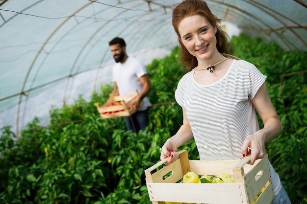 Jonge glimlachende landbouwvrouw vooraan en collega en een krat tomaten, werken, tomaten oogsten in kas.