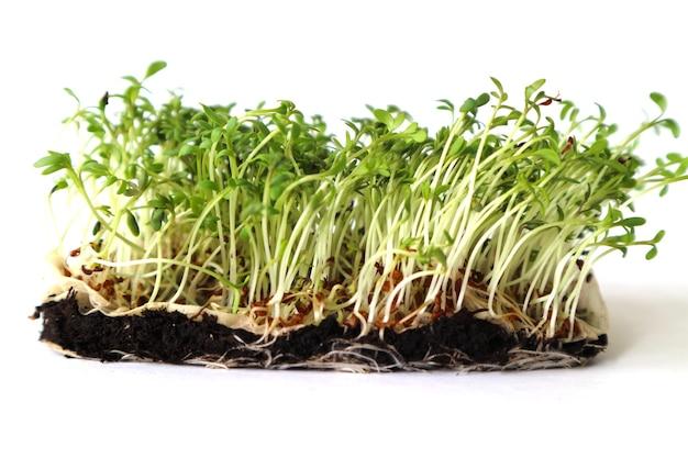Jonge groene planten in de grond