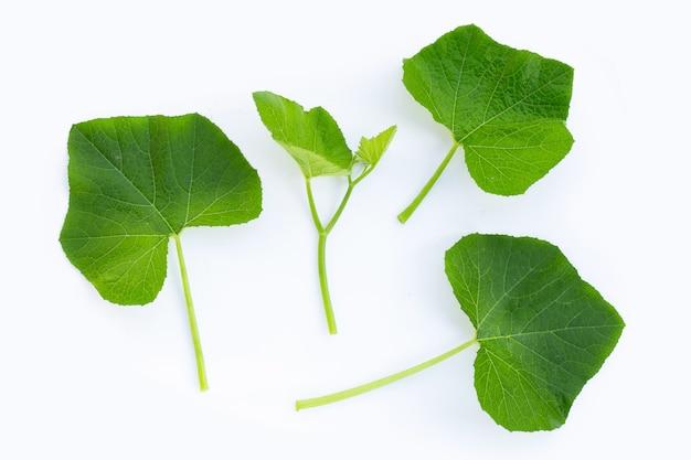 Jonge groene pompoenbladeren die op witte oppervlakte worden geïsoleerd