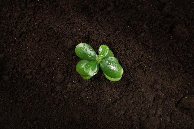Jonge groene spruit in de grond.