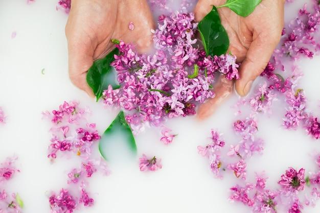 Jonge handen houden lila bloemblaadjes in een melkbad