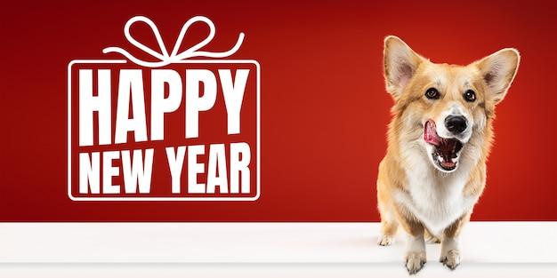 Jonge hond, puppy of huisdier geïsoleerd op rode studio achtergrond wenst gelukkig nieuwjaar en vrolijk kerstfeest. concept van kerstmis, nieuwjaar 2020, winterstemming. copyspace, flyer, ansichtkaart. emoties, dieren.