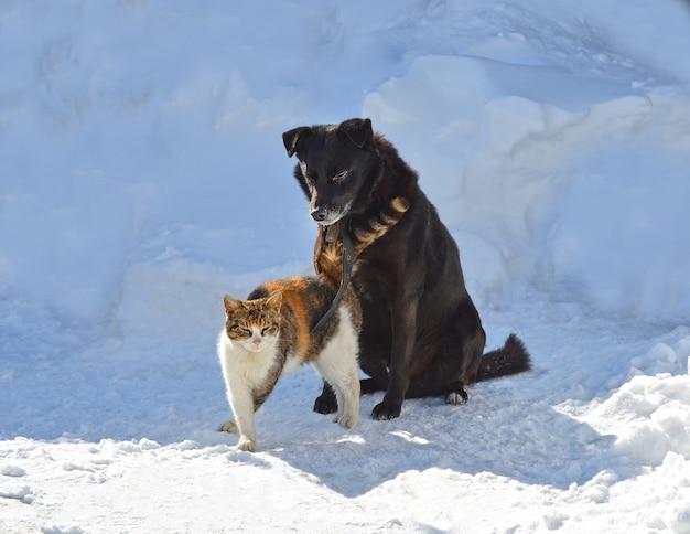 Jonge hond speelt met een kat op een winterse dag in een tuin