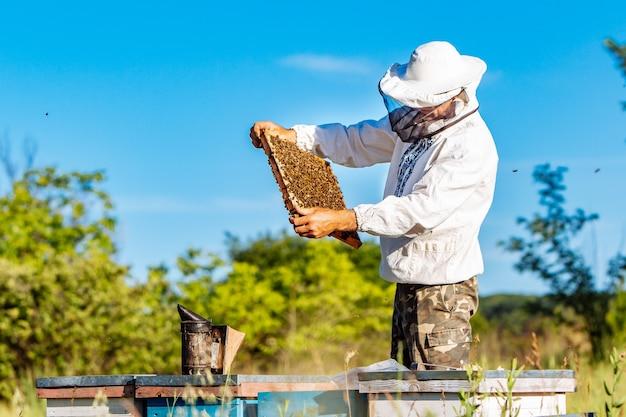 Jonge imker bezig met zijn bijenstal en het verzamelen van honing uit bijenkorven. bijen op honingraat