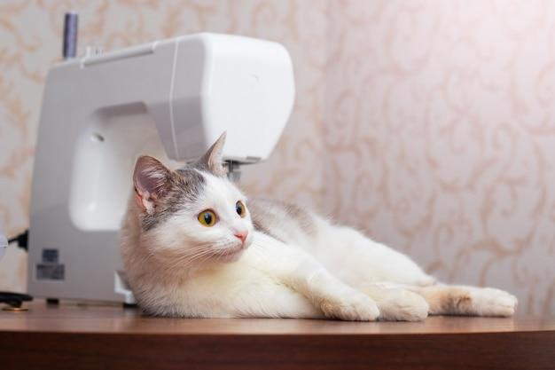 Jonge kat in de werkplaats in de buurt van de naaimachine