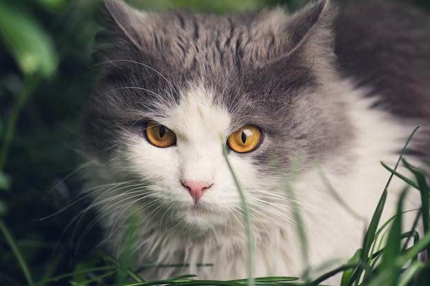 Jonge kat in het gras