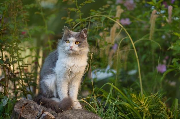 Jonge kat op een mooie lentedag. lente- of zomerfoto.