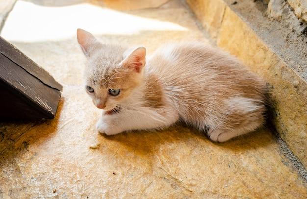 Jonge kat voelt zich bang en alleen op een betonnen vloer