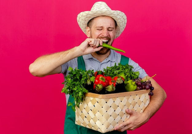 Jonge knappe slavische tuinman in uniform en hoed met mand met groenten bijten peper geïsoleerd op karmozijnrode muur