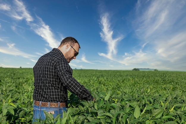 Jonge landbouwingenieur die sojaboonplantage bekijkt.