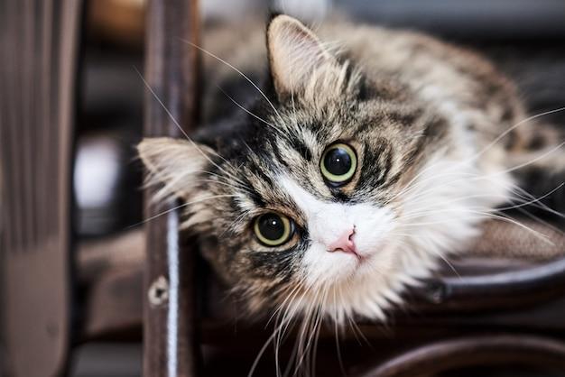 Jonge leuke binnenlandse kat thuis, close-up