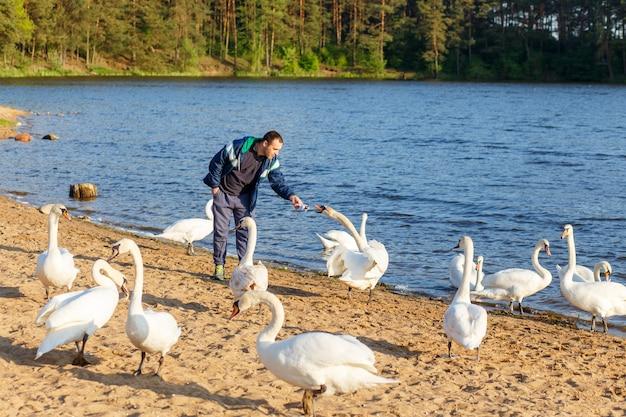 Jonge man die een witte zwaan voedt