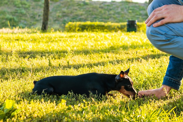 Jonge man die zijn hondje buiten speelt en traint. black and tan dwergpinscher vrouwelijke hond met eigenaar in een park