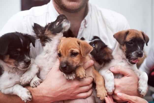 Jonge man met 5 puppies