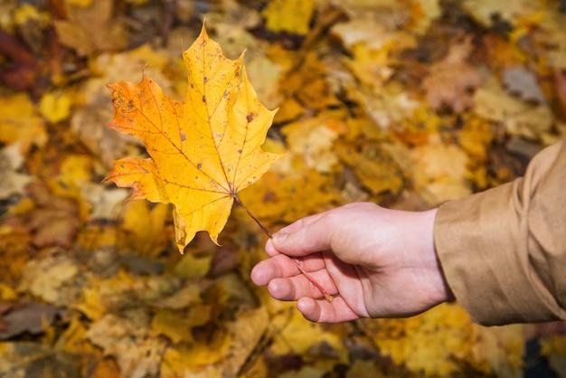 Jonge man met geel esdoornblad tegen een achtergrond van de herfst gebladerte achtergrond