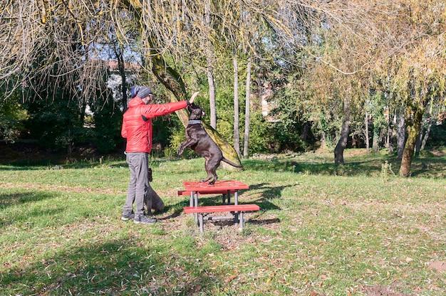 Jonge man opleiding gehoorzaamheid met zijn honden op een koude herfstochtend.
