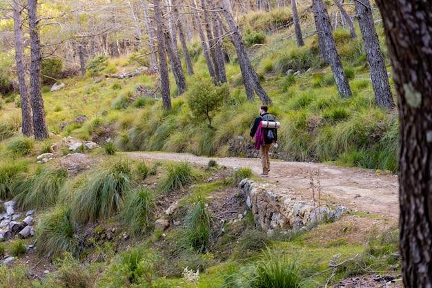 Jonge mannelijke wandelaar loopt op een bergpad midden in een uitgestrekt bos van pijnbomen en kreupelhout, man van achteren draagt grote rugzak met kampeeruitrusting.