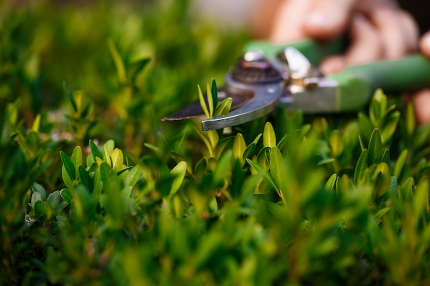 Jonge mooie bloemist die bloemen behandelt. focus op een plant.