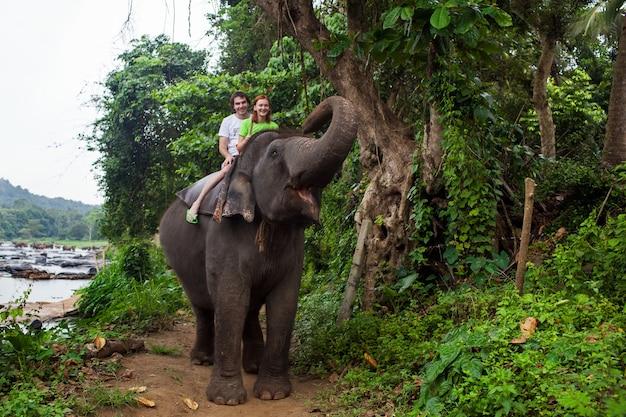 Jonge paartoeristen om op een olifant in pinnewala, sri lanka te berijden.