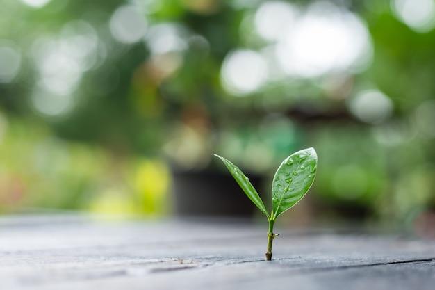 Jonge plant groeit in de ochtend licht met groene natuur bokeh nieuwe levensgroei ecologie zakelijke financiële concept