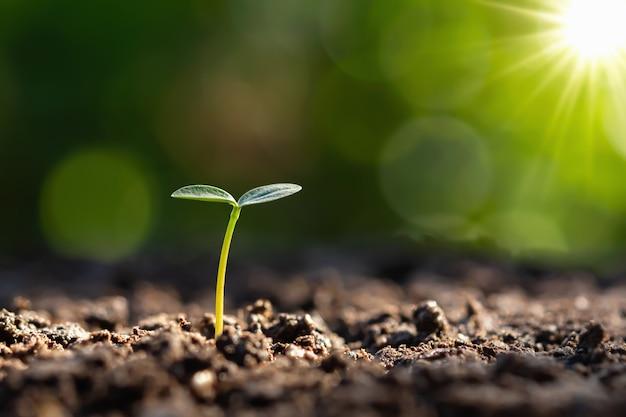 Jonge plant groeit met zonsopgang. groen wereld en aardedagconcept