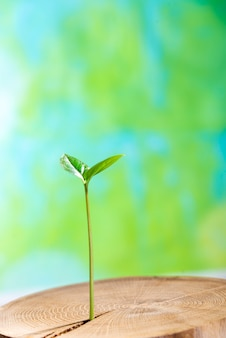 Jonge plant groeit van binnenuit oude boom op groen