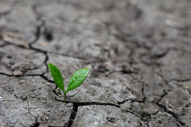 Jonge plant het groeien in het ochtendlicht met groene aard.