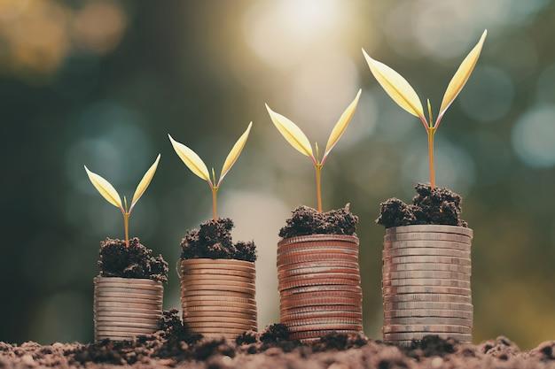 Jonge plant het groeien op geldstapel met de achtergrond van de zonlichtaard